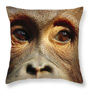 Orangutan Eyes Borneo Throw Pillow