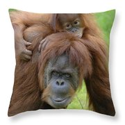 Orangutan Pongo Pygmaeus Female Throw Pillow