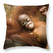 Orangutan Pongo Pygmaeus.  Juvenile Throw Pillow