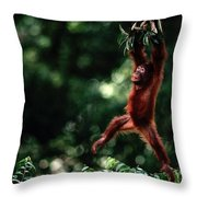 Orangutan Pongo Pygmaeus Throw Pillow