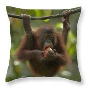 Orangutan Pongo Pygmaeus Young Eating Throw Pillow