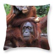Orangutans Throw Pillow