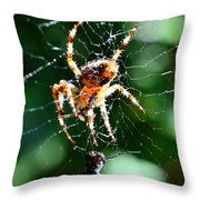 Orb Weaver And Lunch Throw Pillow