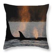 Orca Orcinus Orca Resident Pod Throw Pillow