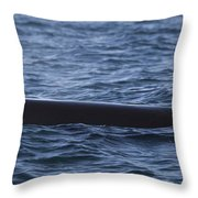Orca Orcinus Orca Surfacing Showing Throw Pillow by Matthias Breiter