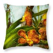 Orchid - Oncidium - Ripened   Throw Pillow