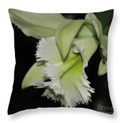 orchid 900 Brassolaeliocattleya Ruben's Verde Chantilly Green Throw Pillow