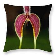 Orchid Bulbophyllum Blumei Flower Throw Pillow