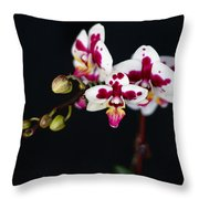 Orchid Flowers Against Black Background Throw Pillow