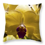 Orchid Study Vi Throw Pillow