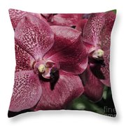 Orchid Vanda And Ascocenda Hybrid II Throw Pillow