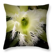 Orchid With Feathery Ends Throw Pillow