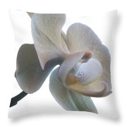 Orchids 1 Throw Pillow by Mike McGlothlen