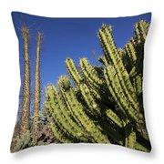 Organ Pipe Cactus Stenocereus Thurberi Throw Pillow