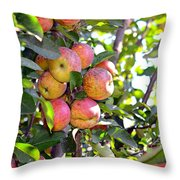 Organic Apples In A Tree Throw Pillow