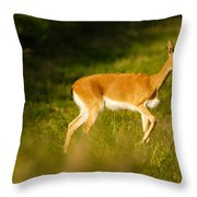 Oribi Two Throw Pillow