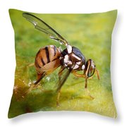 Oriental Fruit Fly Laying Eggs Throw Pillow