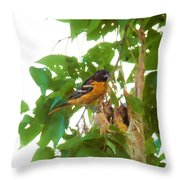 Oriole And Babies Throw Pillow