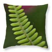 Ornamental Fern Throw Pillow