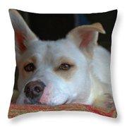 Orvis 0242 Throw Pillow