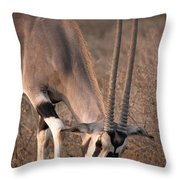 Oryx Oryx Beisa, Samburu National Throw Pillow