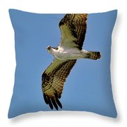 Osprey Above Throw Pillow