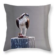 Osprey And Sushi Throw Pillow