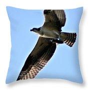 Osprey I Throw Pillow