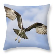 Osprey In Flight One Throw Pillow