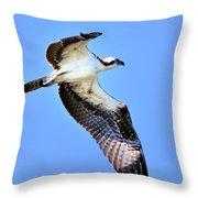 Osprey Inflight Throw Pillow