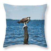 Osprey With Catch. Throw Pillow