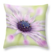 Osteospermum Whirligig Throw Pillow