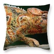 Oustalets Chameleon Furcifer Oustaleti Throw Pillow