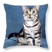 Outstanding American Shorthair Cat Throw Pillow
