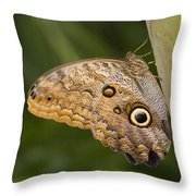 Owl Butterfly Caligo Idomeneus Resting Throw Pillow