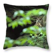 Owl In Woodland, Sachsische Schweiz Throw Pillow