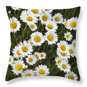 Ox-eyed Daisies, Banff National Park Throw Pillow