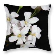 Oxalis Flowers 3 Throw Pillow