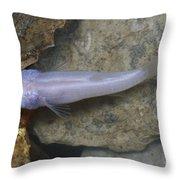 Ozark Blind Cavefish Throw Pillow