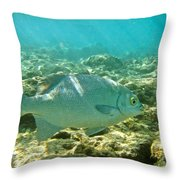 Pacific Chub 1080113.jpg Throw Pillow