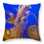 Pacific Sea Nettle Chrysaora Fuscescens Throw Pillow