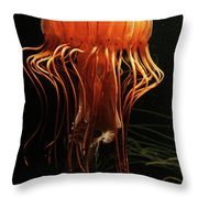 Pacific Sea Nettle Chrysaora Throw Pillow