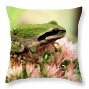 Pacific Tree Frog Throw Pillow by Laurel Talabere