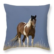 Paint Filly Before Throw Pillow