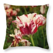 Painted Candy Cane Tulip Throw Pillow
