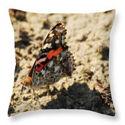 Painted Lady 8591 3341 Throw Pillow