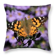 Painted Lady Among The Asters Throw Pillow