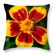 Painting With The Morning Dew Throw Pillow