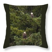 Pair Of Bald Eagles Throw Pillow by Darcy Michaelchuk