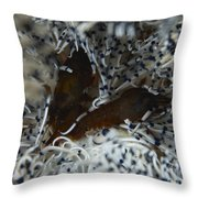 Pair Of Brown Snapping Shrimps Throw Pillow